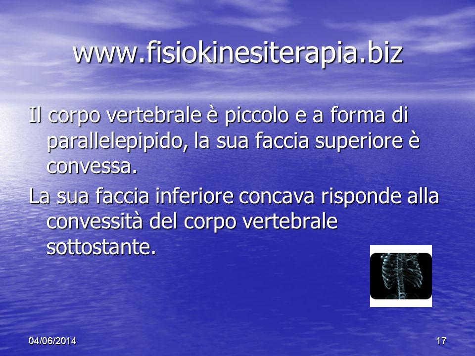 www.fisiokinesiterapia.biz Il corpo vertebrale è piccolo e a forma di parallelepipido, la sua faccia superiore è convessa.