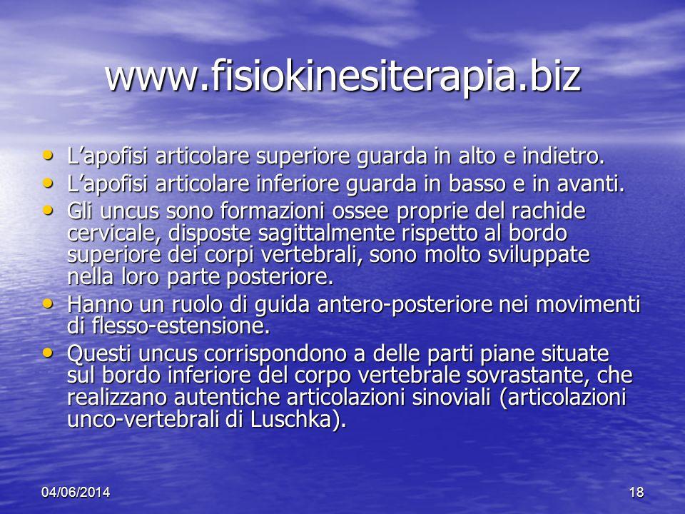 www.fisiokinesiterapia.biz L'apofisi articolare superiore guarda in alto e indietro. L'apofisi articolare inferiore guarda in basso e in avanti.