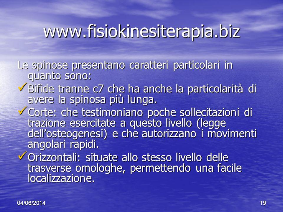 www.fisiokinesiterapia.biz Le spinose presentano caratteri particolari in quanto sono: