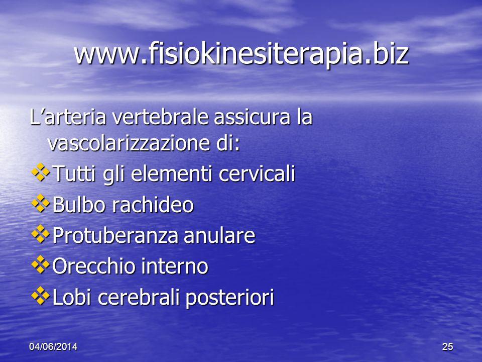 www.fisiokinesiterapia.biz L'arteria vertebrale assicura la vascolarizzazione di: Tutti gli elementi cervicali.