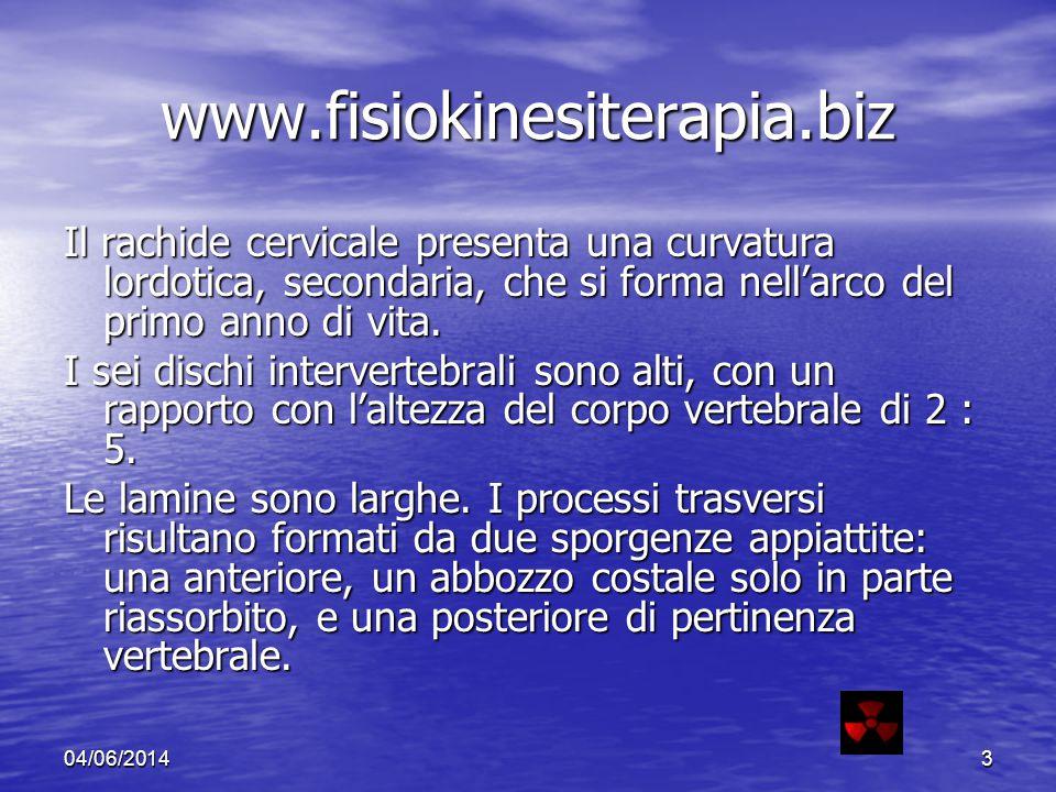 www.fisiokinesiterapia.biz Il rachide cervicale presenta una curvatura lordotica, secondaria, che si forma nell'arco del primo anno di vita.