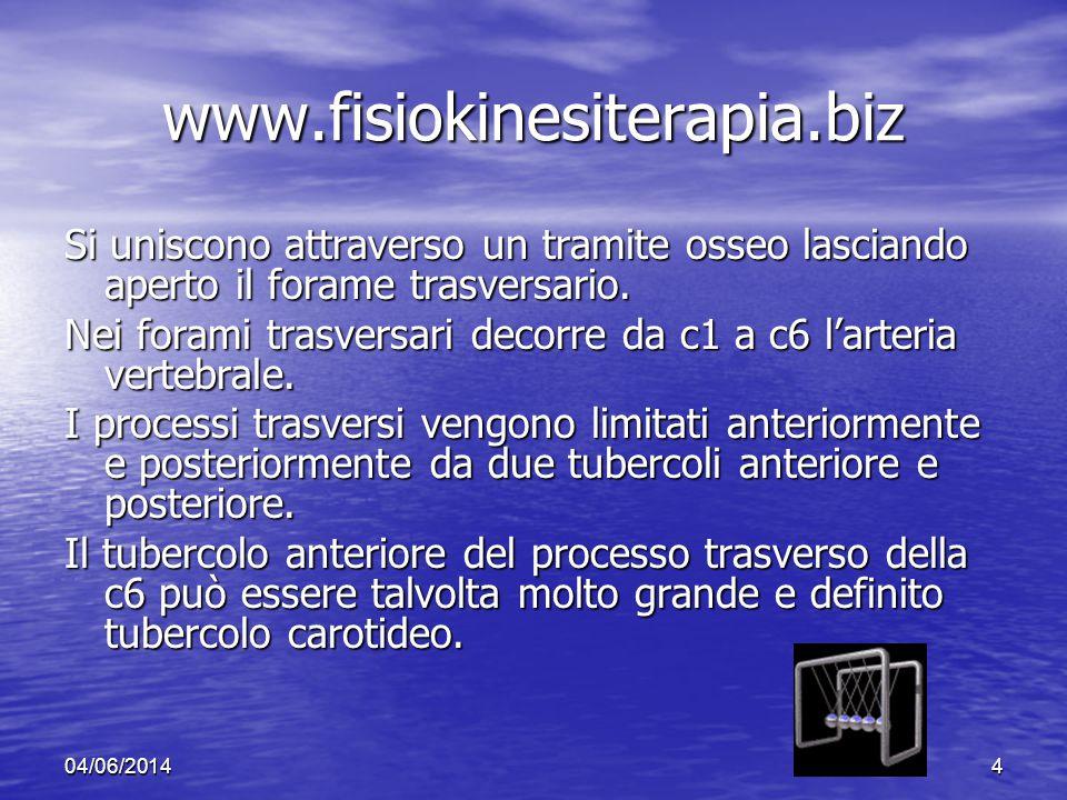 www.fisiokinesiterapia.biz Si uniscono attraverso un tramite osseo lasciando aperto il forame trasversario.