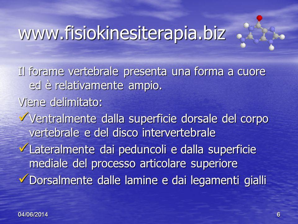 www.fisiokinesiterapia.biz Il forame vertebrale presenta una forma a cuore ed è relativamente ampio.