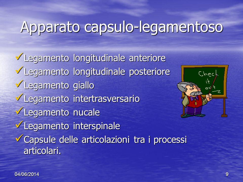 Apparato capsulo-legamentoso
