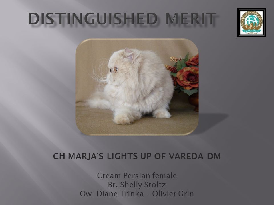 CH MARJA'S LIGHTS UP OF VAREDA DM