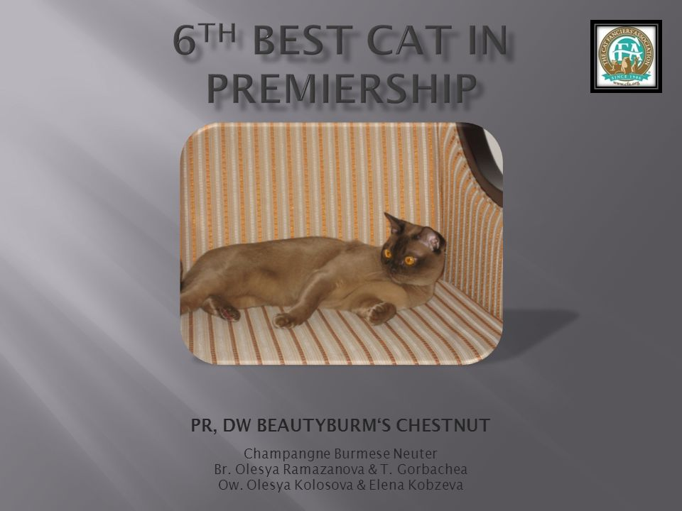 6th best Cat in Premiership