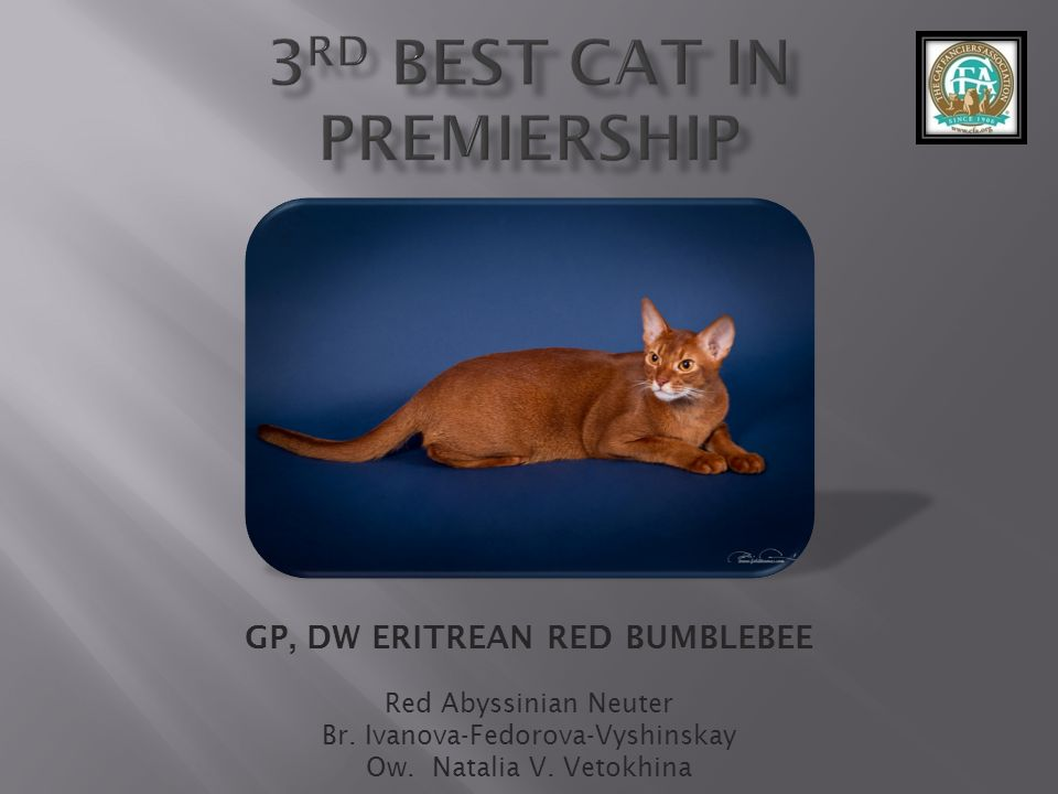 3rd best Cat in Premiership