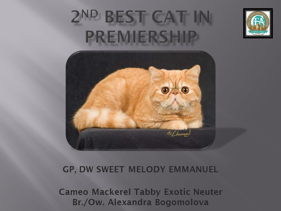 2nd best Cat in Premiership