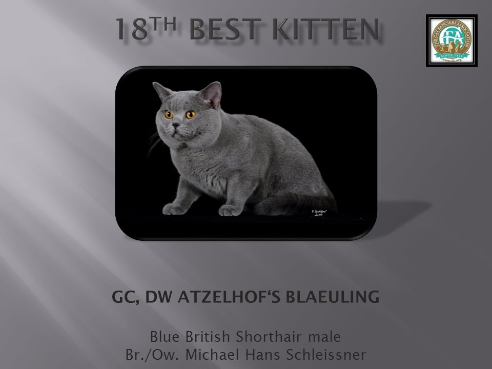 GC, DW ATZELHOF'S BLAEULING