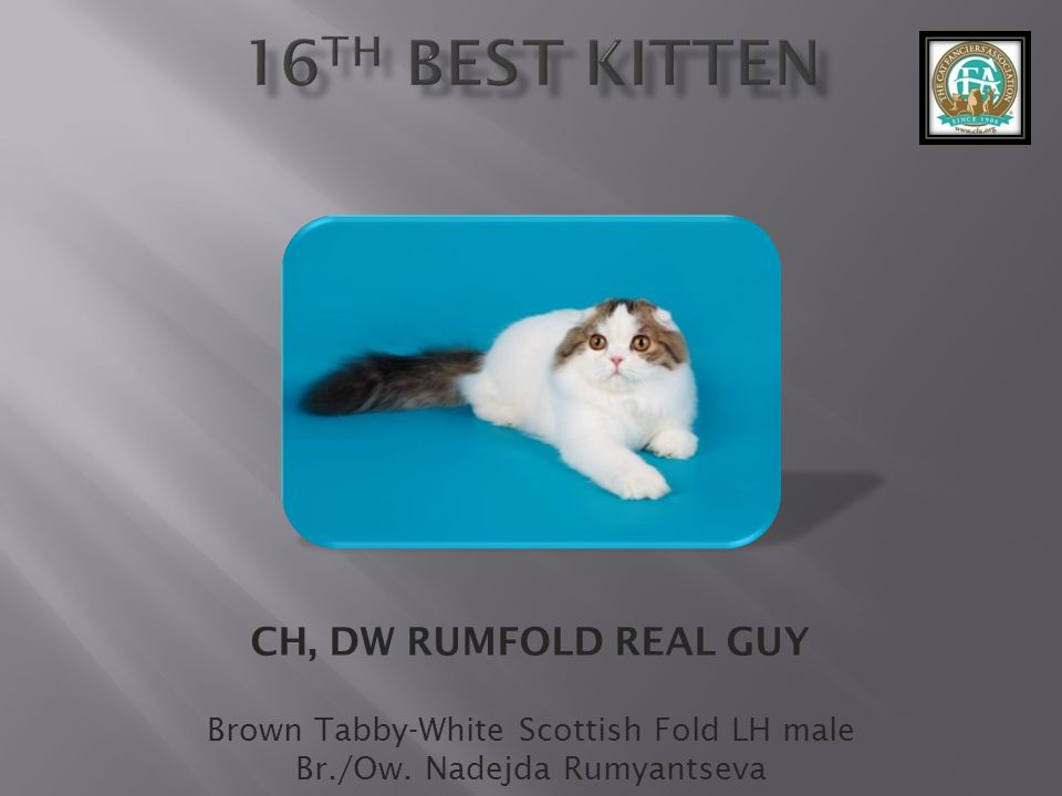16th best Kitten CH, DW RUMFOLD REAL GUY