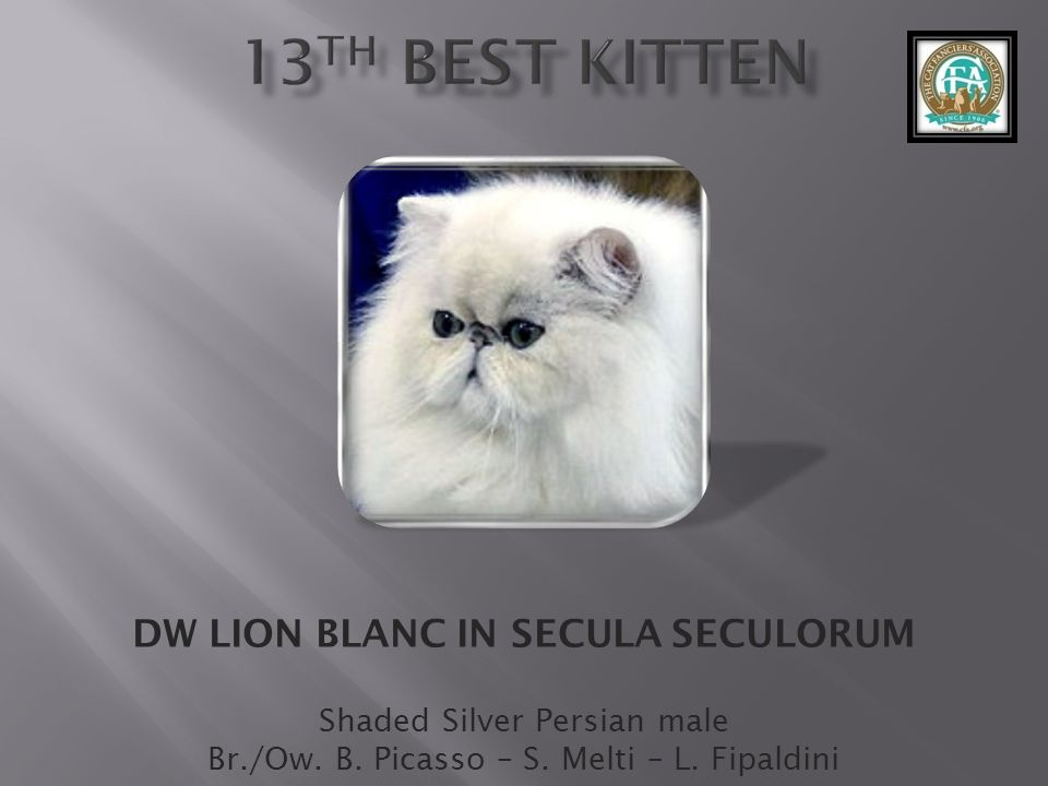 DW LION BLANC IN SECULA SECULORUM