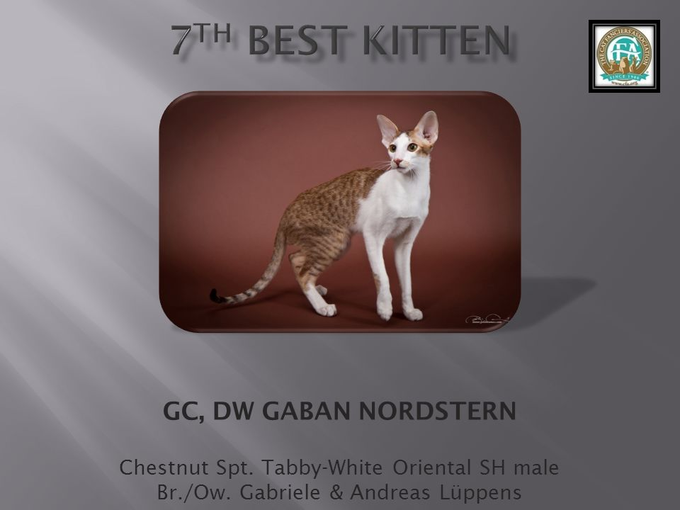 7th best Kitten GC, DW GABAN NORDSTERN