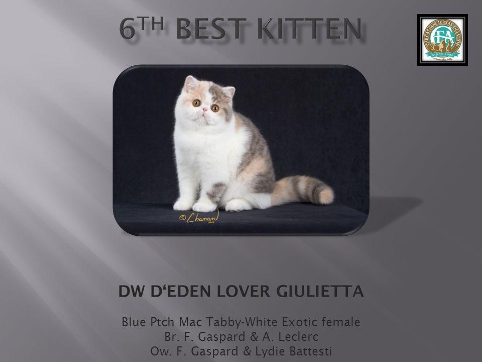 DW D'EDEN LOVER GIULIETTA