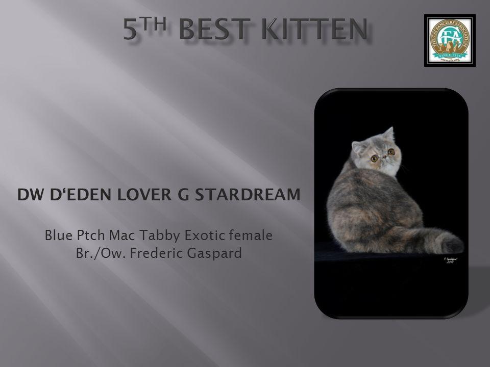 DW D'EDEN LOVER G STARDREAM