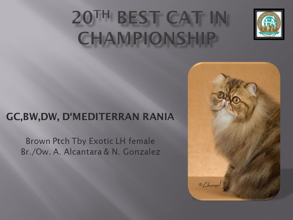 20th best Cat in CHAMPIONShip