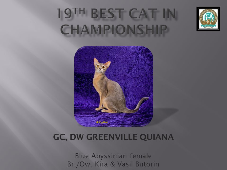 19th best Cat in CHAMPIONShip