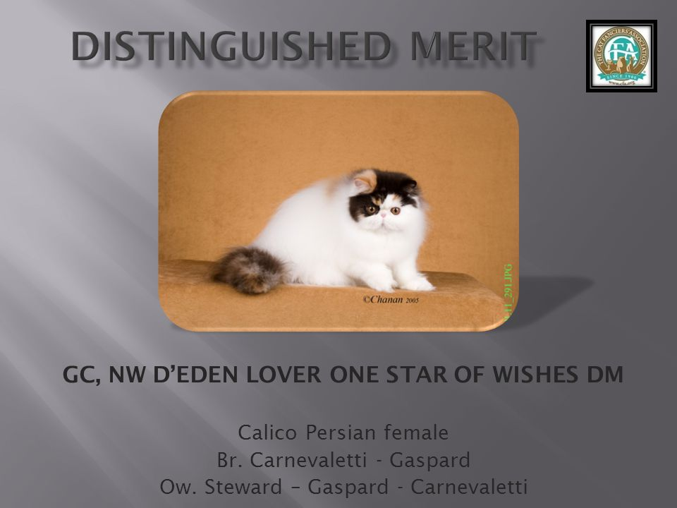 GC, NW D'EDEN LOVER ONE STAR OF WISHES DM