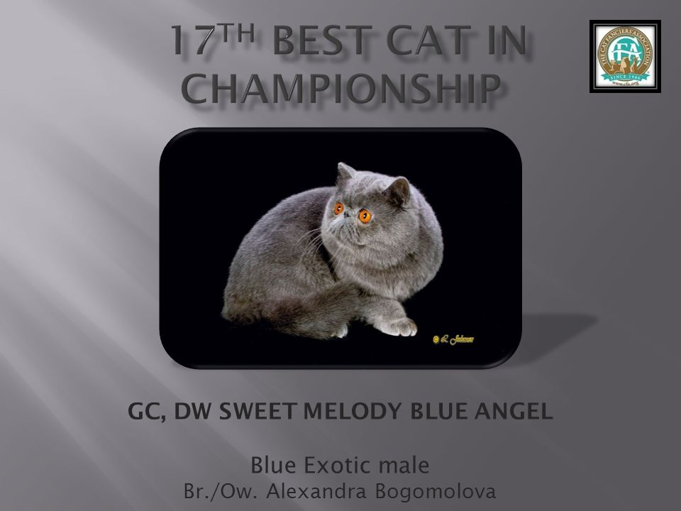 17th best Cat in Championship