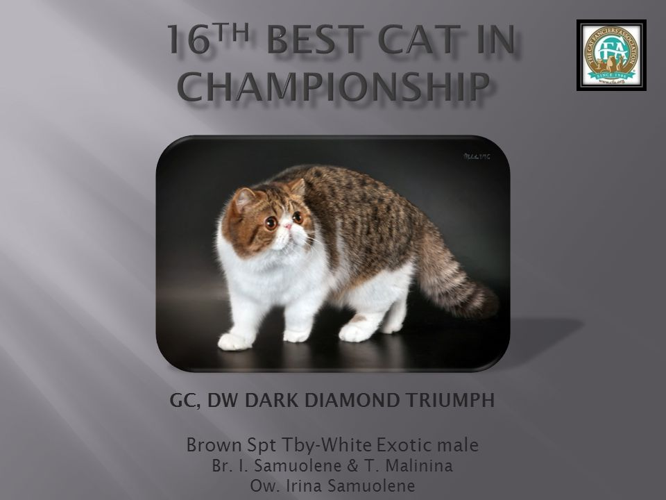 16th best Cat in Championship