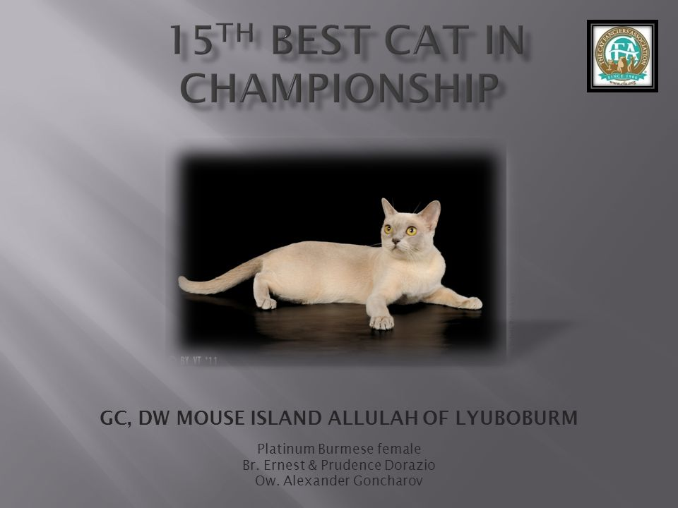 15th best Cat in Championship