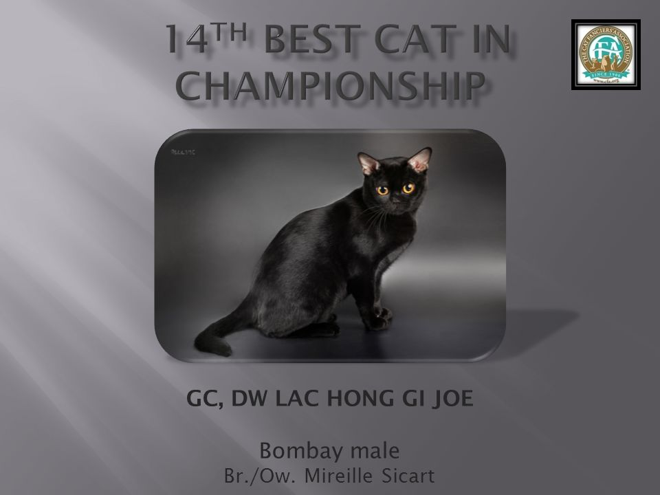 14th best Cat in Championship