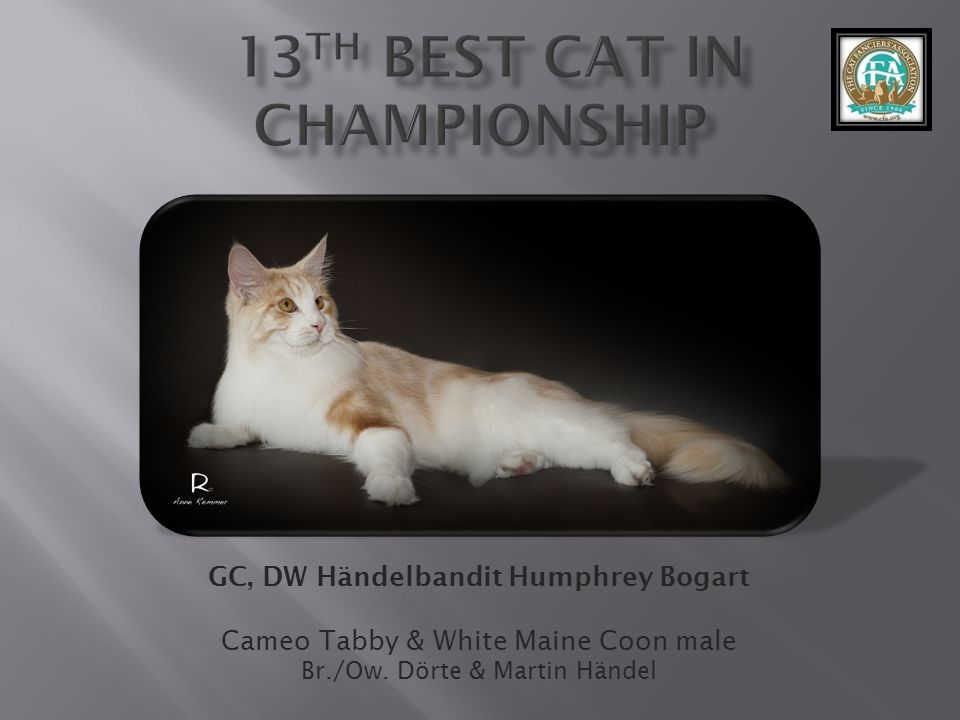 13th best Cat in Championship