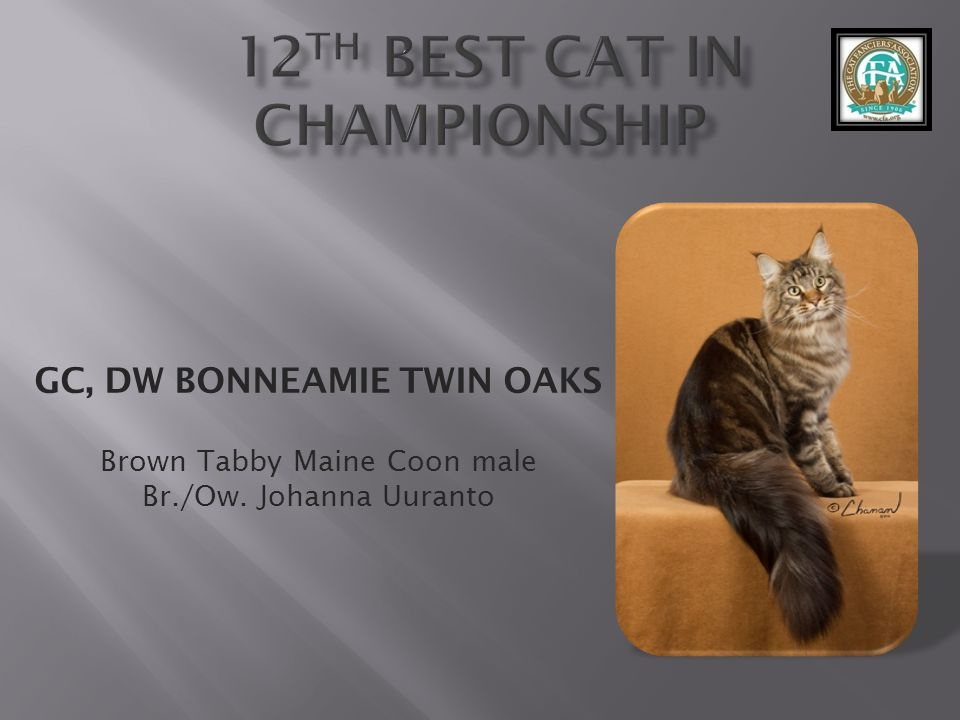 12th best Cat in Championship
