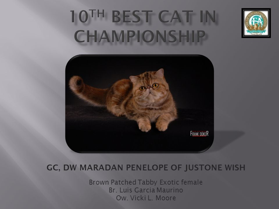 10th best Cat in Championship