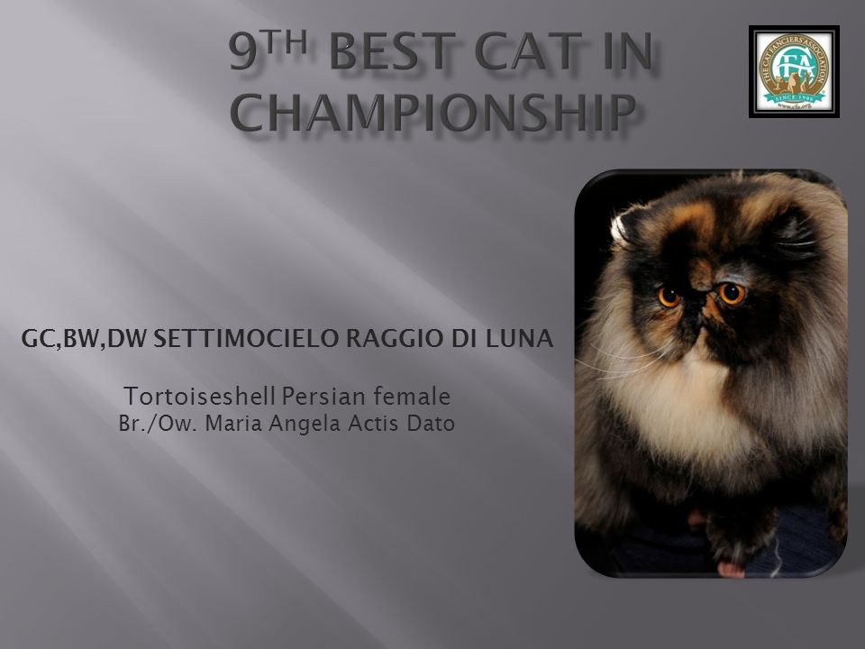 9th best Cat in Championship