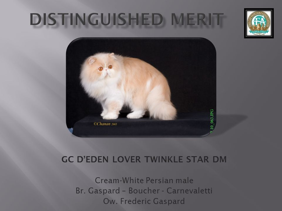GC D'EDEN LOVER TWINKLE STAR DM