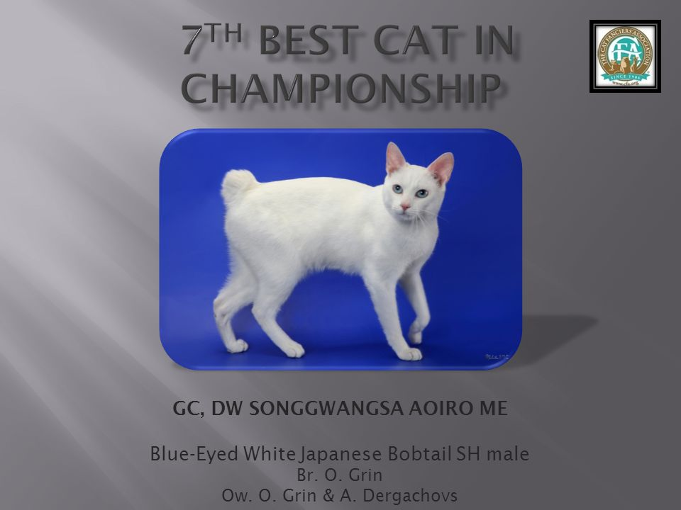 7th best Cat in Championship