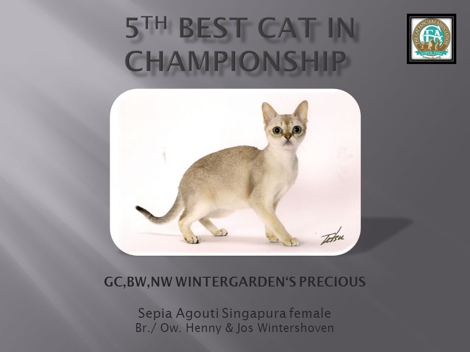 5th best Cat in Championship