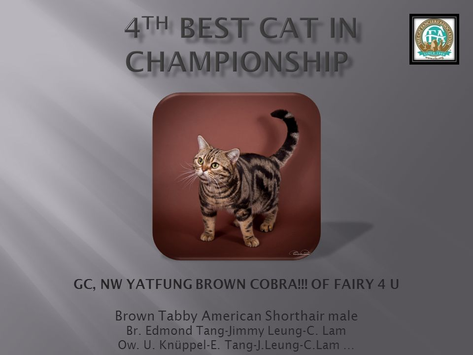 4th best Cat in Championship