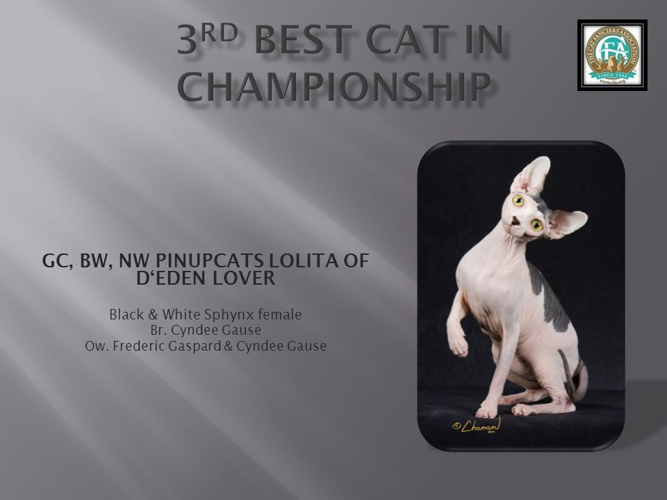 3rd best Cat in Championship