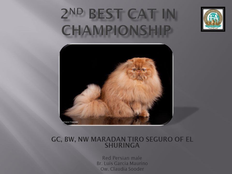 2nd best Cat in Championship
