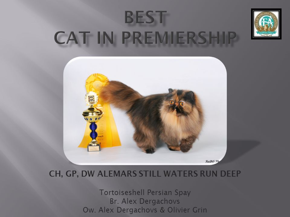 best Cat in Premiership