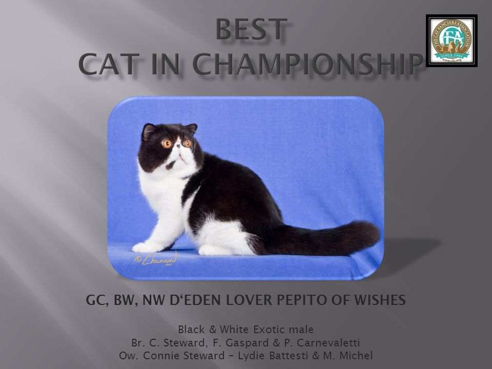 best Cat in Championship