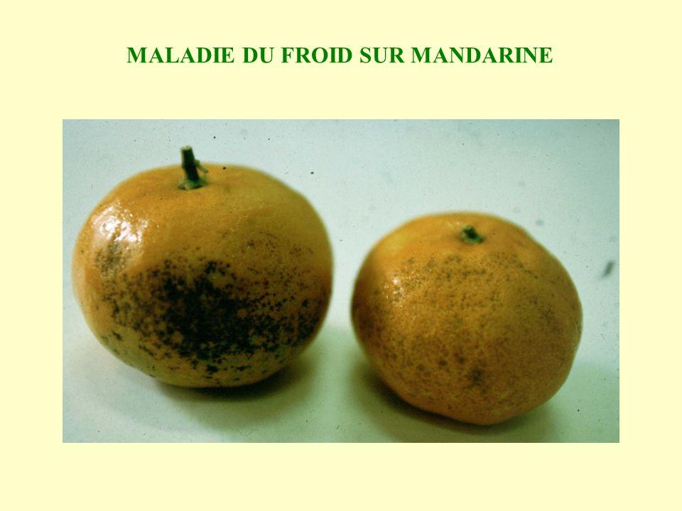 MALADIE DU FROID SUR MANDARINE
