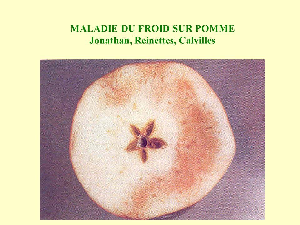 MALADIE DU FROID SUR POMME Jonathan, Reinettes, Calvilles