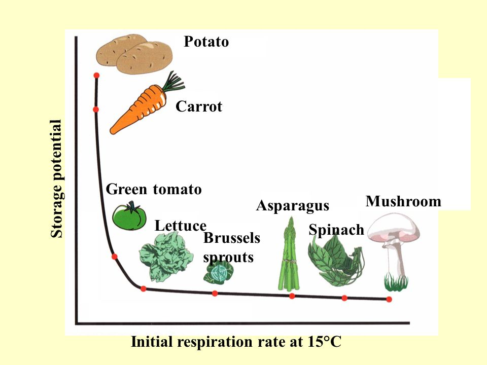 PotatoCarrot. Storage potential. Green tomato. Mushroom. Asparagus. Lettuce. Spinach. Brussels. sprouts.