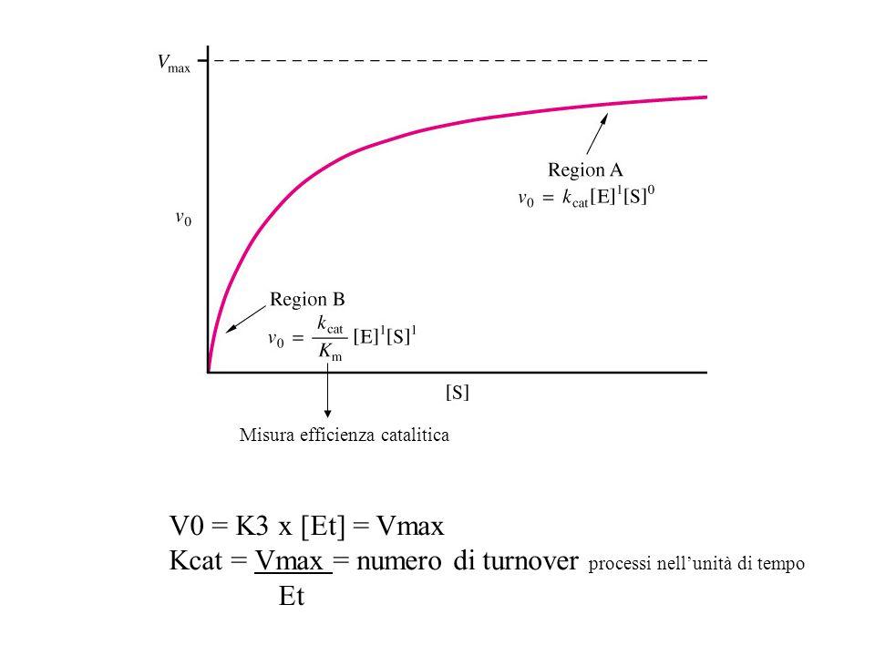 Kcat = Vmax = numero di turnover processi nell'unità di tempo Et