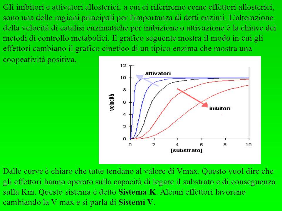 Gli inibitori e attivatori allosterici, a cui ci riferiremo come effettori allosterici, sono una delle ragioni principali per l importanza di detti enzimi. L alterazione della velocità di catalisi enzimatiche per inibizione o attivazione è la chiave dei metodi di controllo metabolici. Il grafico seguente mostra il modo in cui gli effettori cambiano il grafico cinetico di un tipico enzima che mostra una coopeatività positiva.