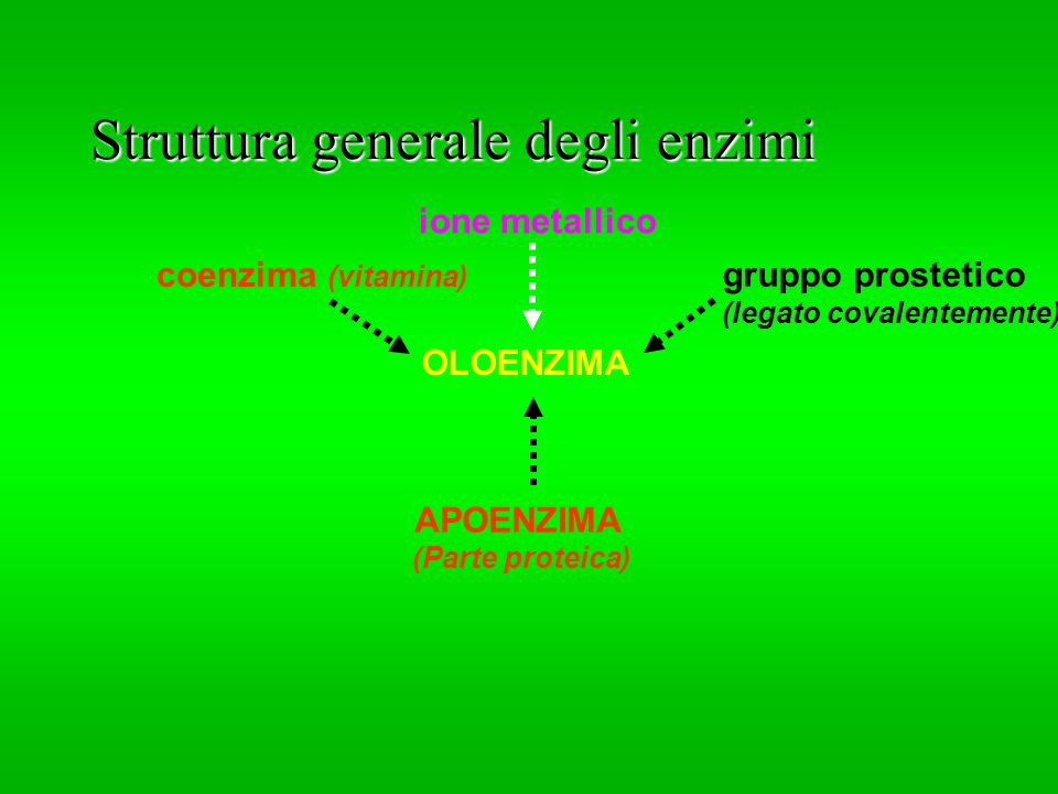 Struttura generale degli enzimi