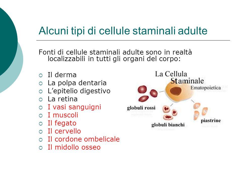 Alcuni tipi di cellule staminali adulte