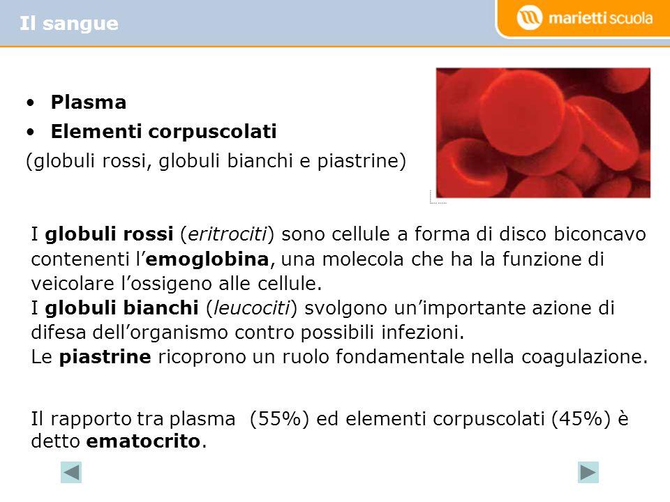 Il sangue Plasma. Elementi corpuscolati. (globuli rossi, globuli bianchi e piastrine)