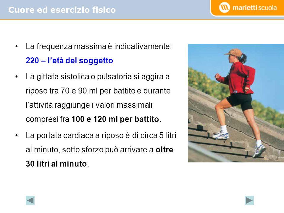 Cuore ed esercizio fisico