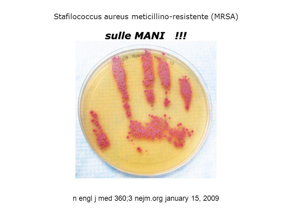 Stafilococcus aureus meticillino-resistente (MRSA)