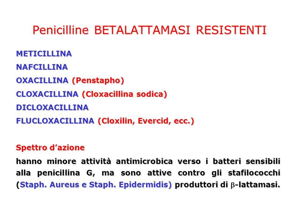 Penicilline BETALATTAMASI RESISTENTI
