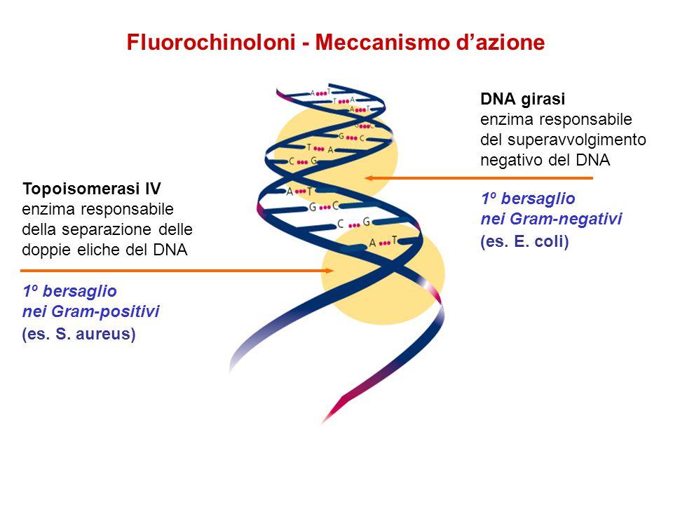 Fluorochinoloni - Meccanismo d'azione