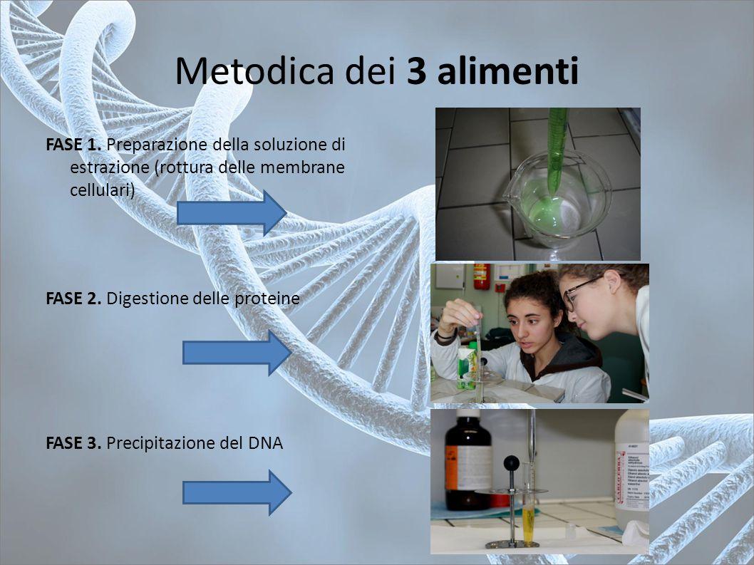 Metodica dei 3 alimenti FASE 1. Preparazione della soluzione di estrazione (rottura delle membrane cellulari)